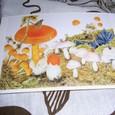熊田千佳慕作 <赤い屋根の下>のポストカード
